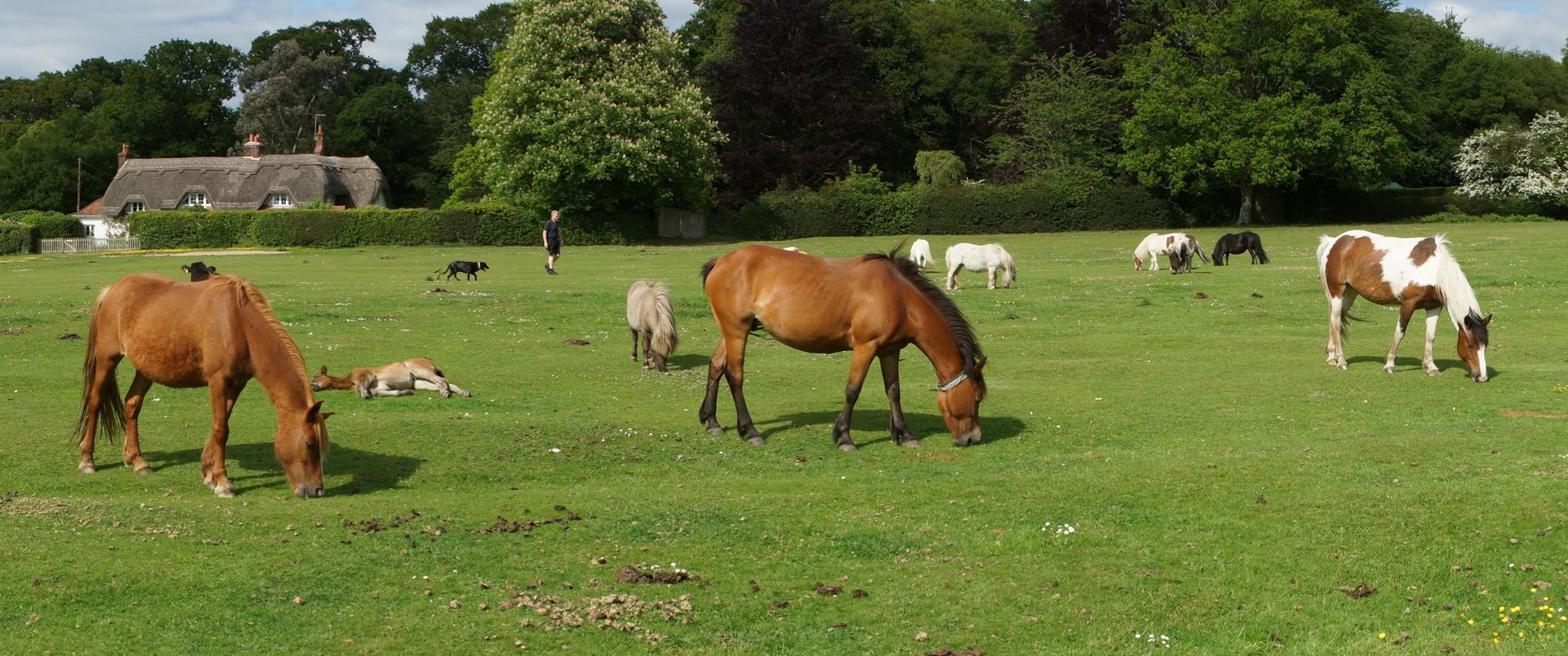 Horses on the Common (© 2018 Bill Shepley)